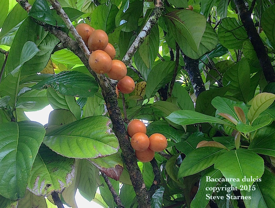 Tropical Fruit and Nut Plants
