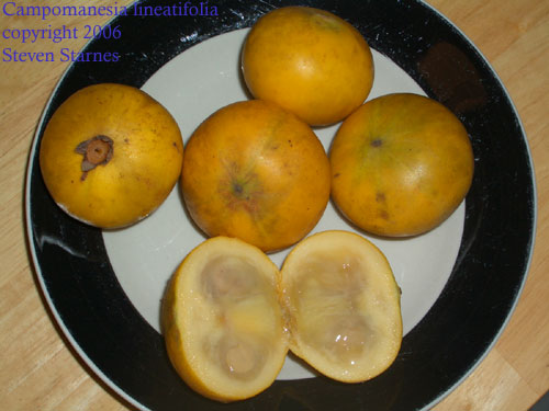 smelly fruit mamey fruit