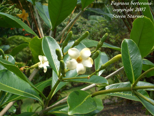 Hawaiin Tropical Plant Nursery Ornament Tree Shrub Plants