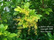 Hawaiin Tropical Plant Nursery Ornament Tree Amp Shrub Plants