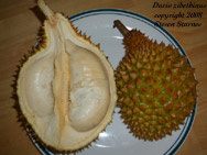 Durio zibethinus, Durian